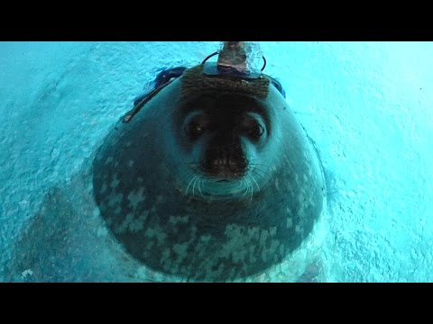 Antarctic seals may use the Earth's magnetic field to survive while hunting
