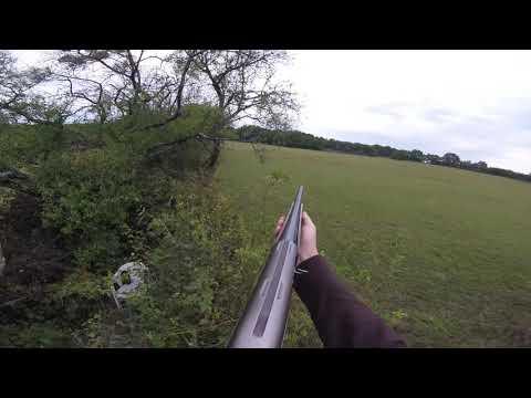 chasse au sanglier loupé