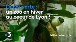 Un zoo en hiver au cœur de Lyon - Météo à la carte