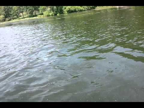 Bass fishing rockland lake ny youtube for Freshwater fishing ny