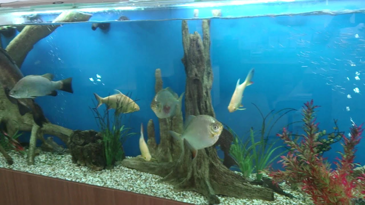 Perfect decorating extra tall aquariums universal youtube for Tall fish tank decorations