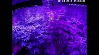 Full cannabis grow timelapse (140 days)