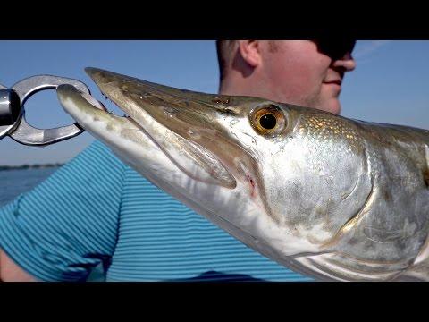 Muskie Fishing On Lake St. Clair