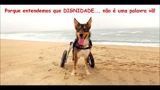 Dog Locomotion  xXx