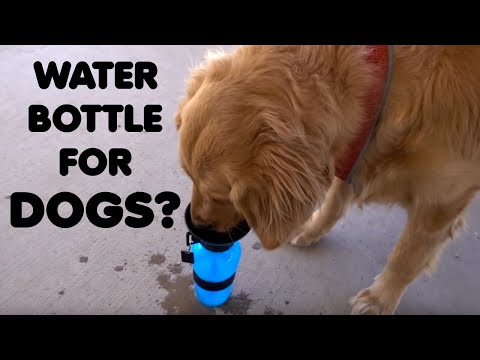 Aqua Dog Review: Water Bottle for Pets