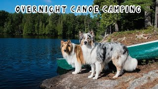 Overnight Canoe Adventure with My Dogs
