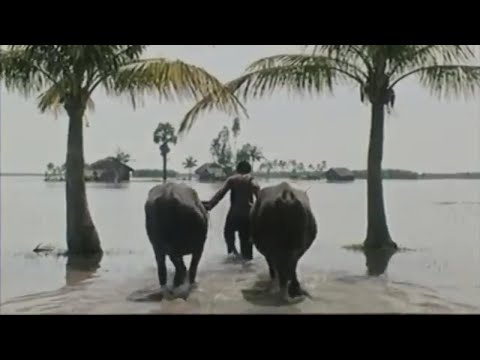 Xem phim Mùa len trâu - Mùa Len Trâu