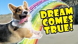 corgis-dream-comes-true-best-day-ever-life-after-college-ep-525