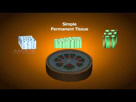 Plant Tissues - Class 9 Tutorial