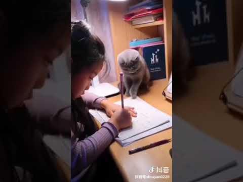 Cat Series: Cat that supervises kid to do homework