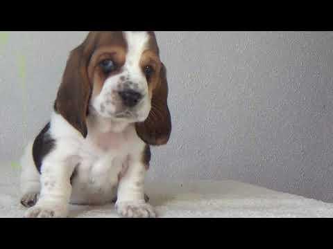 Male2  4 weeks old