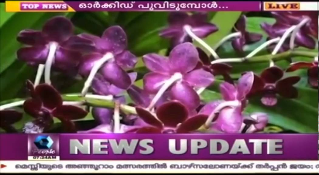 More Than 300 Crore Import Orchid Farming Gaining Importance In