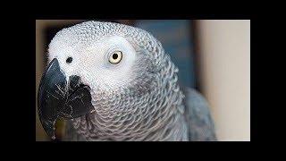 놀람 46세로 죽고 없고 손도끼 남성의 가족은 앵무새의 말을 들어서 놀란다