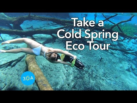 Natural Cold Springs at Cypress Springs in Florida