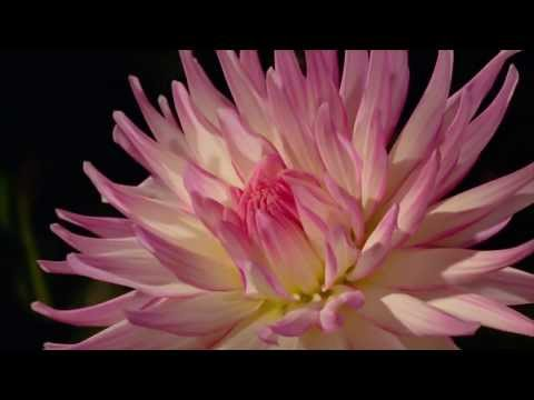 Blooming flowers, Amazing nature! thumbnail