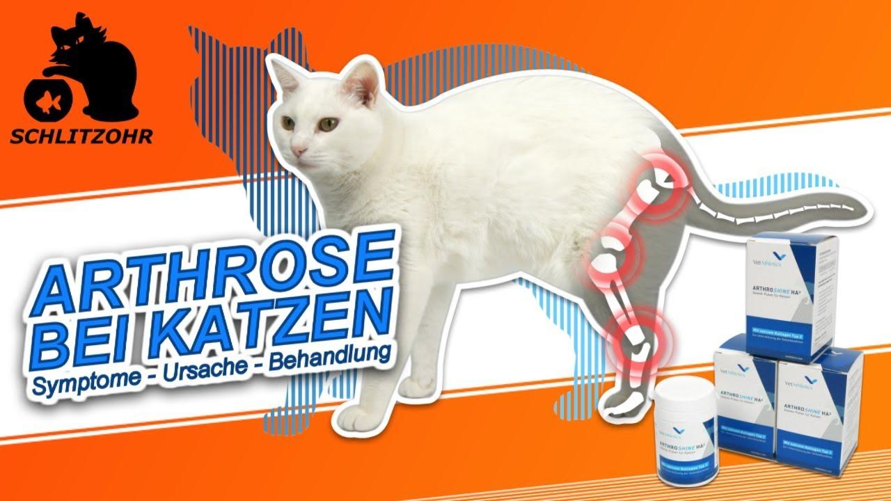 Lässt sich Arthrose bei Katzen behandeln?