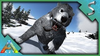 Download lagu POLAR DIRE BEAR TAMING BREEDING THE NEW TLC POLAR BEAR Ark Survival Evolved MP3