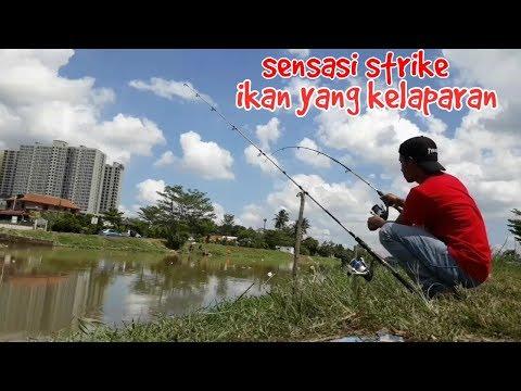 Mancing di pinggir kota johor bahru/ikan nya rakus banget
