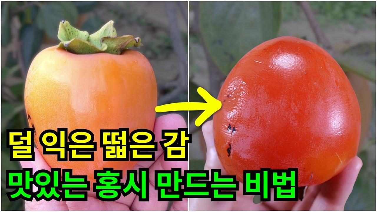 덜 익은 떫은 감 맛있는 홍시 만드는 비법 / 빨리 홍시를 만들고 싶을 땐 이렇게 해보세요! / 덜 익은 감을 자연홍시처럼 달고 맛나게 익히는 방법