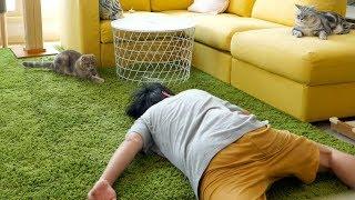 고양이 앞에서 죽은 척을 해봤어요