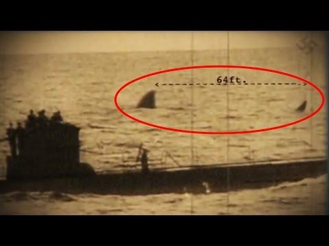Caught on Camera - Megalodon Shark on Tape Near Kayaker ...