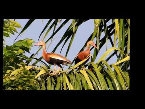 Honduras Bird Watching