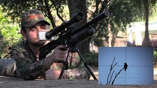 Starling Pest Control at Marshall Vale(SHOOTING EQUIPMENT: FX Impact: http://www.fxairguns.com/rifle/impact/ www.airgunsofarizona.com Atlas Bipod: http://amzn.to/22vURCp Hawke Frontier 30 ..., 2016-07-27T16:35:59.000Z)