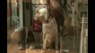 The Dog Who Saved Christmas (2009) Official Trailer