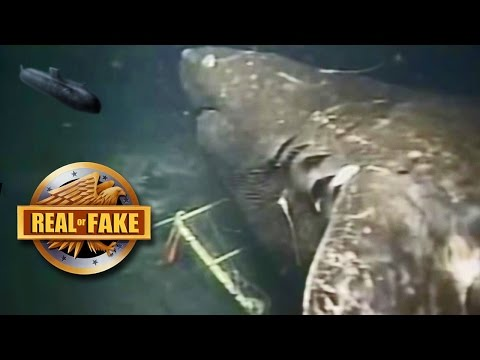 MEGALODON CAUGHT ON CAMERA - real or fake
