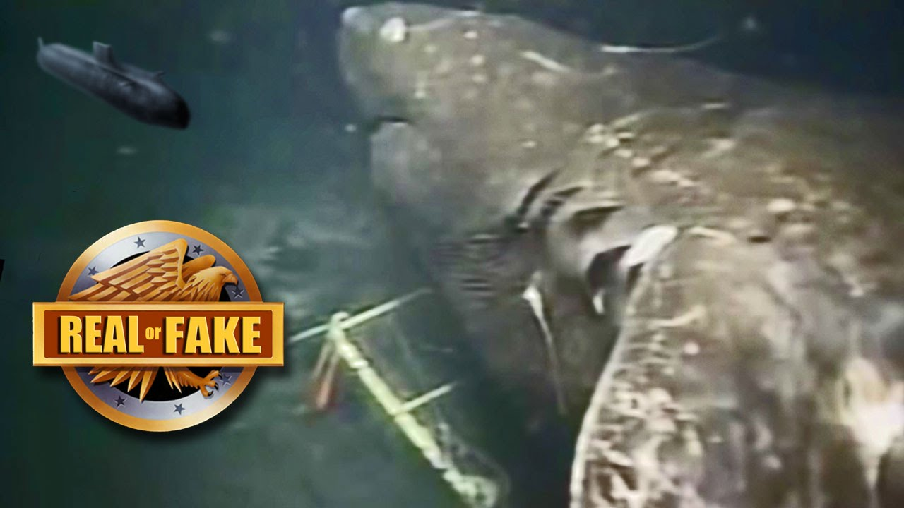 MEGALODON Caught On Camera- real or fake