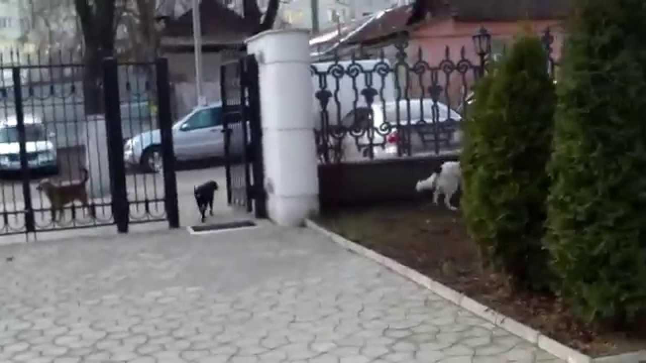 O haită de cîini vagabonzi s-a oploșit la Serviciul Vamal