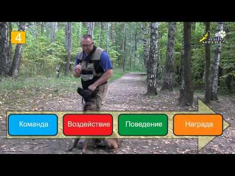 Дрессировка собак, команда рядом, 5 правил использования механики