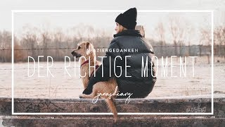DER RICHTIGE MOMENT - Spaziergedanken #1 | janasdiary