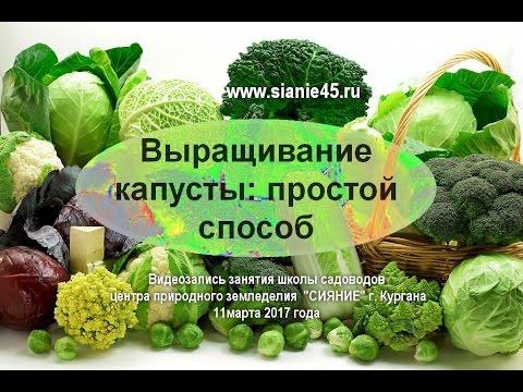 Выращивание капусты: простой способ