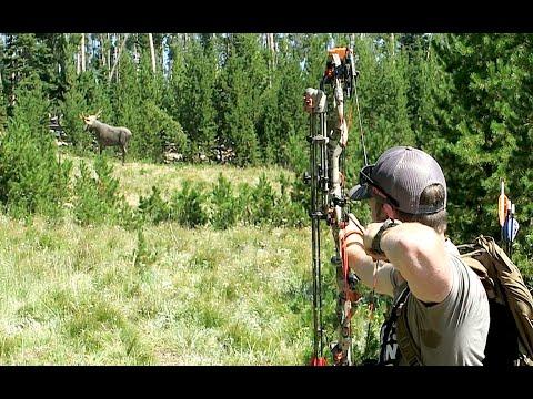 SHOOTING BULL MOOSE AT 105 YARDS!