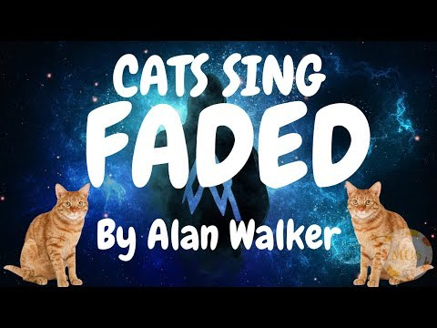Cats Sing Faded by Alan Walker  | Cats Singing Song