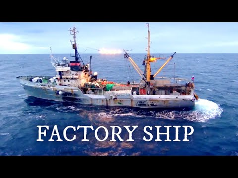 Largest Fish Factory Vessel. Episode 2 | Documentary | Science Channel