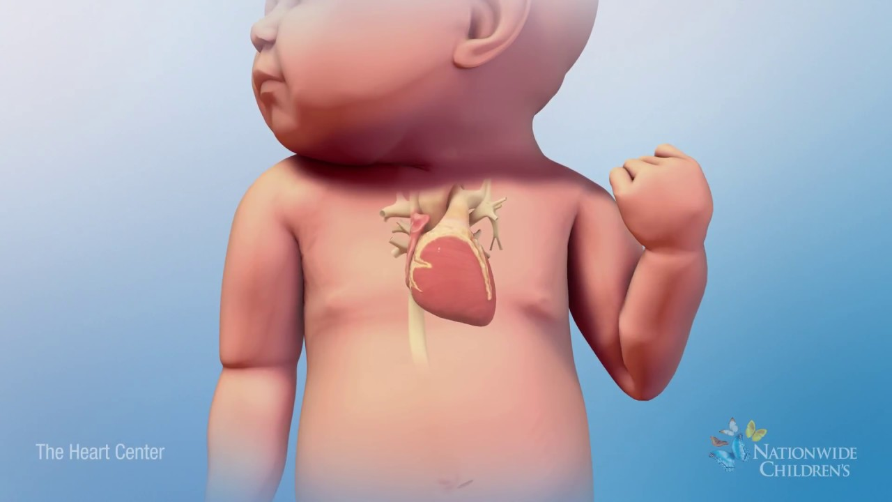 Beating Heart Animation  How a Normal Heart Works  YouTube