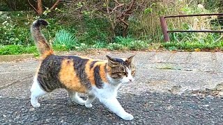 Walking around the ruined town is fun with various cats