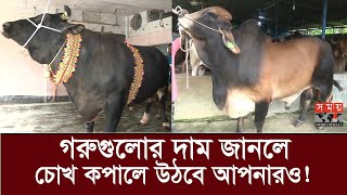 কোরবানির বাজারে চলছে কিং ও বড় মিয়াদের রাজত্ব! | Biggest Qurbani Cow in Bangladesh 2020