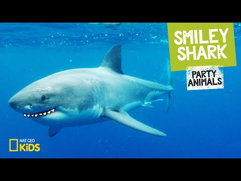 Smiley Shark | Party Animals