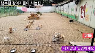 행복한 강아지들 사는집 몽이들의 일상.