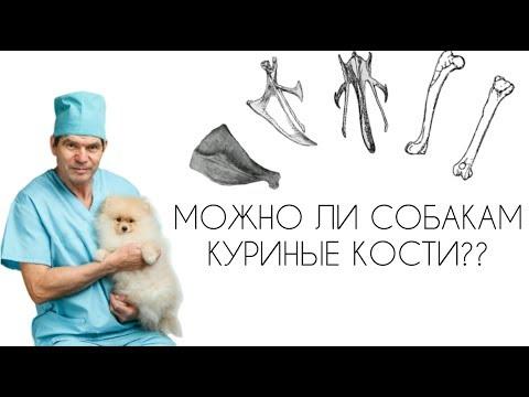 Вопрос: Почему считают, что трубчатые кости вредят собакам и кошкам?