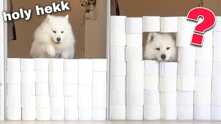 My Dog's Reaction To The Toilet Paper Wall Challenge