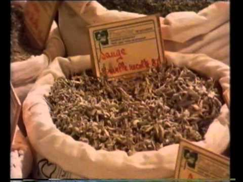 Herbs: Aromatic Influences - The Spice of Life - BBC production 1983