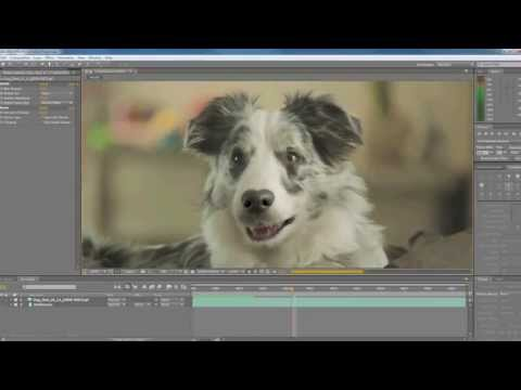 Promotheus: yes5HD campaign  - the making of the talking dog
