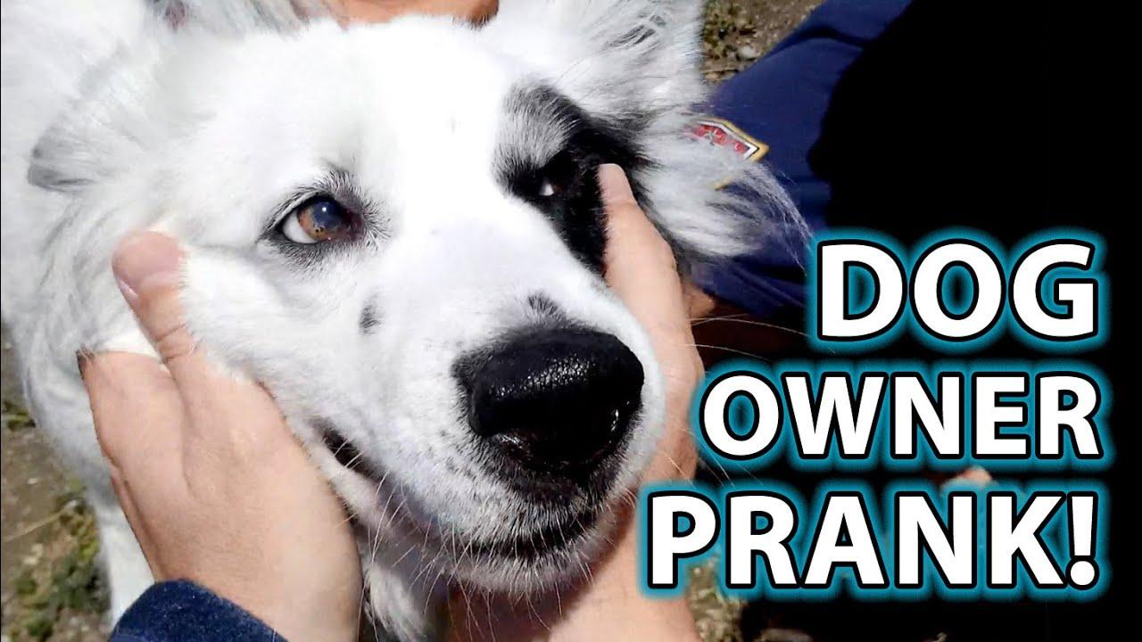 Dog OWNERS Prank! Funny Pet Prank! - YouTube