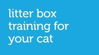 How to Train Your Cat to Use the Litterbox (Petco)