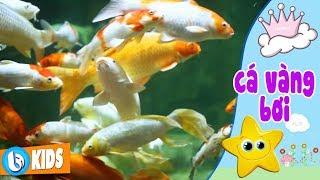 Cá Vàng Bơi - Hai Vây Xinh Xinh | Nhạc Thiếu Nhi 2018