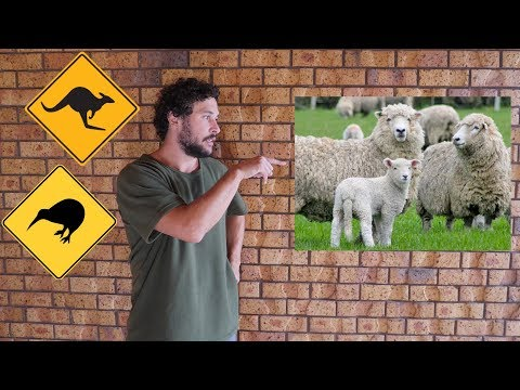 Pt.2 - DIFFERENCE BETWEEN AUSTRALIA & NEW ZEALAND